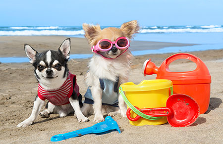 Holiday Time: Travelling with your pets