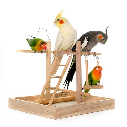 Bird Products